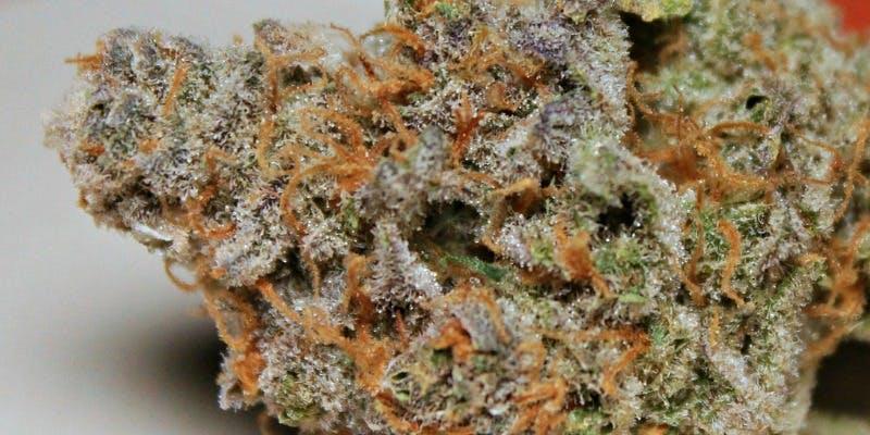 Plushberry Weed; Plushberry Cannabis Strain; Plushberry Indica Marijuana Strain