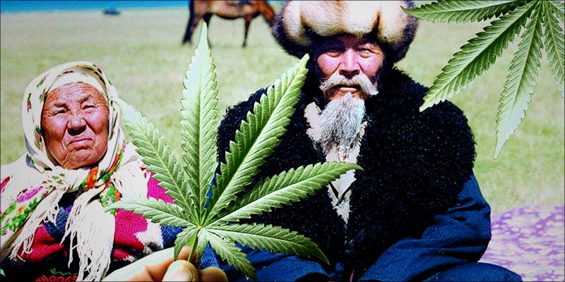 TOP 10 PLACES 7 Heres What Happened When A Bunch Of Pensioners Raided A Pot Shop