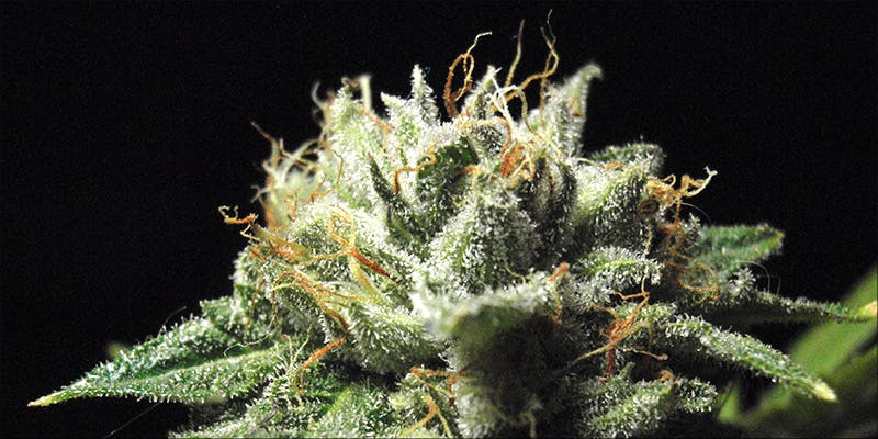 Whats The Difference 3 10 Answers To The Most Commonly Asked Questions About Weed