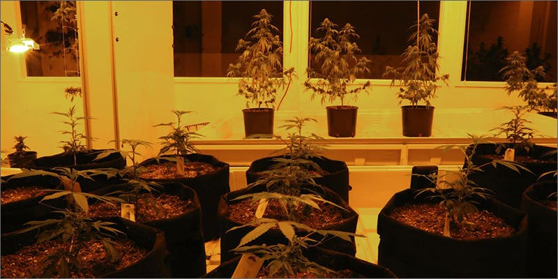sen2 Heres What Happened When A Bunch Of Pensioners Raided A Pot Shop