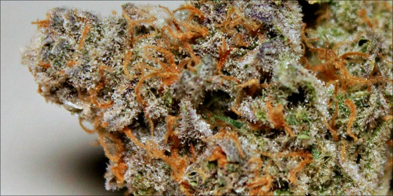 10 Best Indicas 2 10 Best Indica Strains To Round Off Your 420 Celebrations