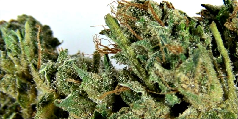 10 Best Indicas 3 10 Best Indica Strains To Round Off Your 420 Celebrations