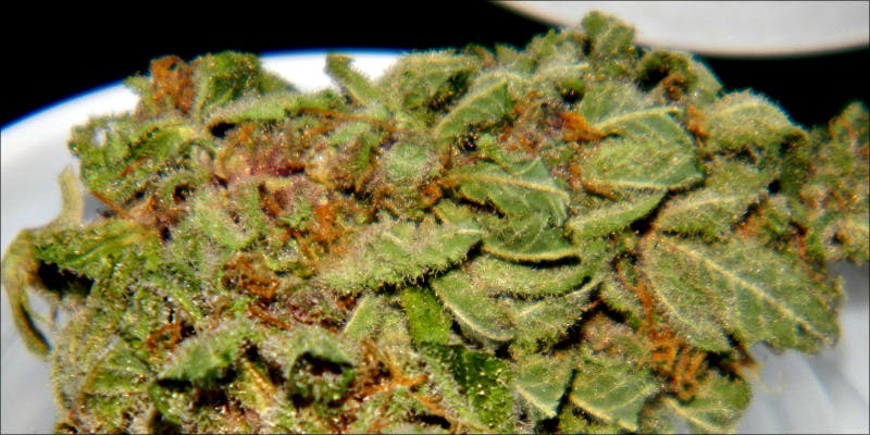 10 Best Indicas 4 10 Best Indica Strains To Round Off Your 420 Celebrations