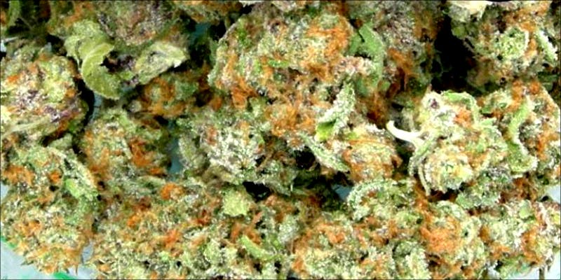 10 Best Indicas 6 10 Best Indica Strains To Round Off Your 420 Celebrations