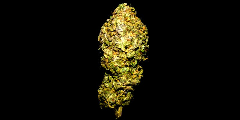 10 Best Indicas 8 10 Best Indica Strains To Round Off Your 420 Celebrations