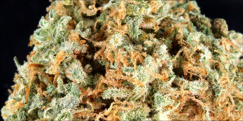 10 Best Indicas 9 10 Best Indica Strains To Round Off Your 420 Celebrations
