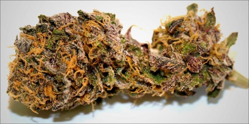 10 Best Purple 1 7 New Ways Cannabis Will Dominate Your Wellness Regime