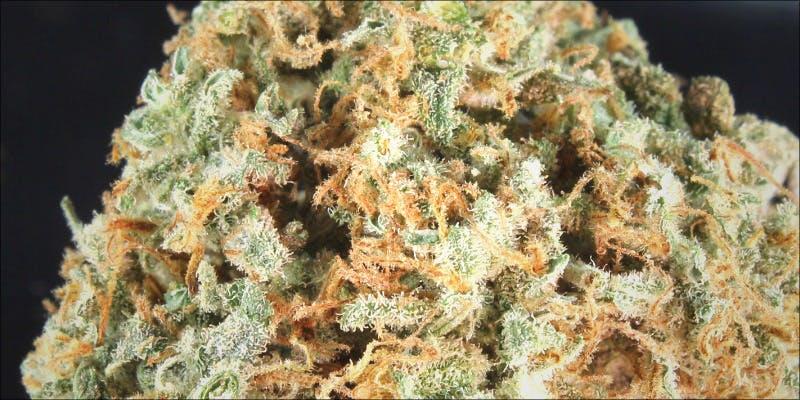 10 Best Purple 4 7 New Ways Cannabis Will Dominate Your Wellness Regime