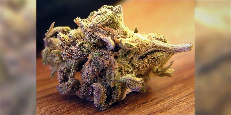 10 Best Purple 6 7 New Ways Cannabis Will Dominate Your Wellness Regime
