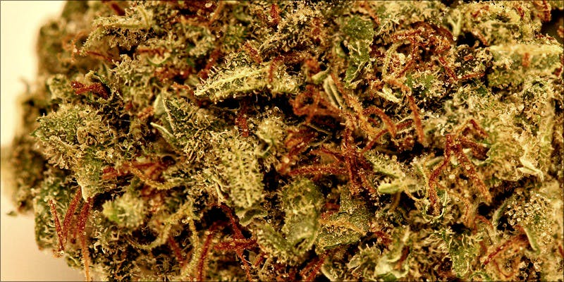10 Best Sativas 1 Heres What 81 Pounds Of Seized Weed Looks Like