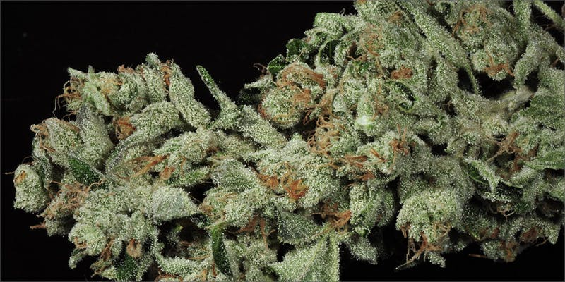 5strains Easter 5 10 Best Indica Strains To Round Off Your 420 Celebrations