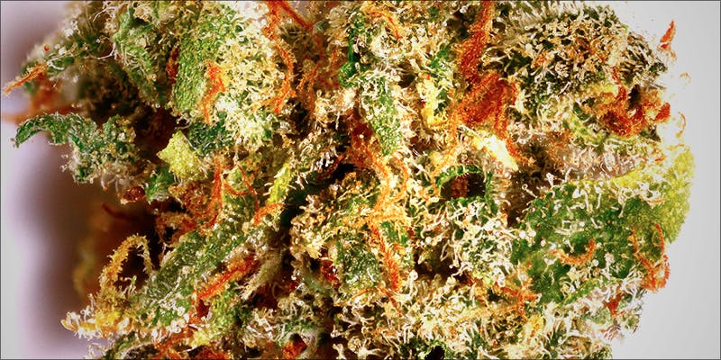 Curb Your Munchies 4 10 Best Indica Strains To Round Off Your 420 Celebrations