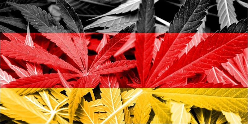 Germany Heres What 81 Pounds Of Seized Weed Looks Like