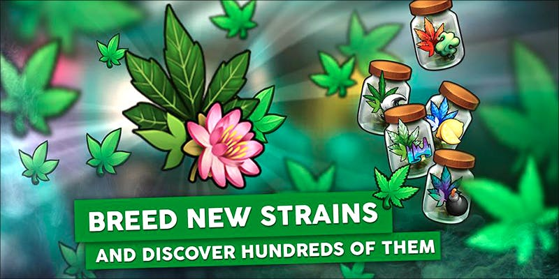 Hempire The New 1 10 Best Indica Strains To Round Off Your 420 Celebrations