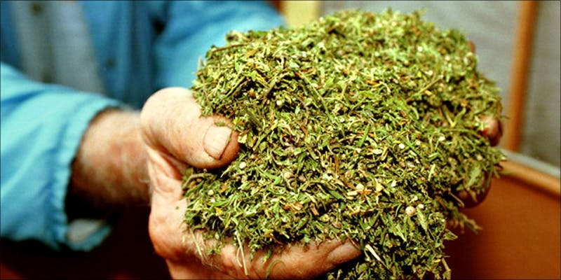 Is Medical Marijuana 2 10 Best Indica Strains To Round Off Your 420 Celebrations