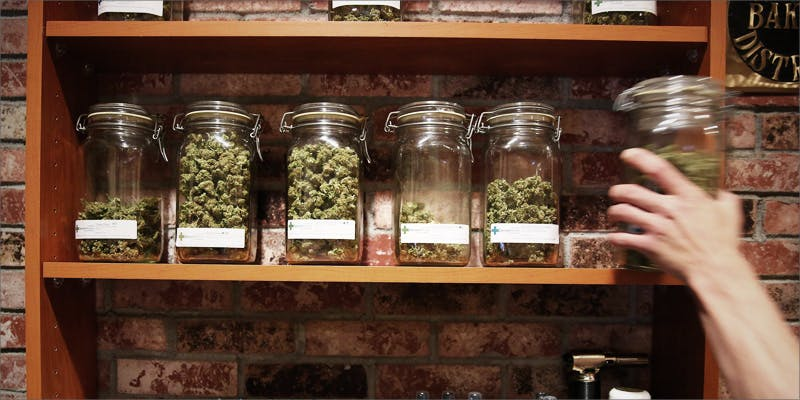 Mistakes Cannabis Companies 4 Heres What 81 Pounds Of Seized Weed Looks Like