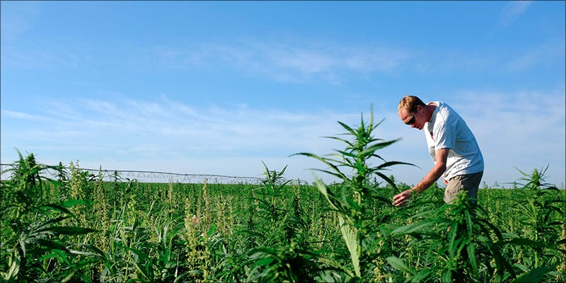 Ten Cool Facts 1 10 Cool Facts About Hemp You Probably Didnt Know