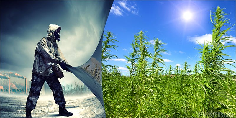 Ten Cool Facts 6 10 Cool Facts About Hemp You Probably Didnt Know
