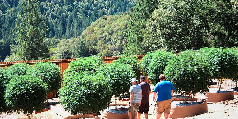 The Worlds First 2 This Formerly Winery Is Now The Worlds First Cannabis Campus