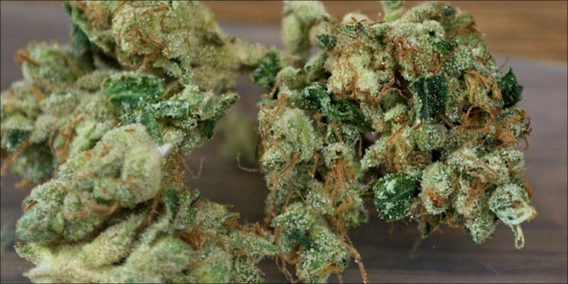 Weed Strains That 1 Heres What 81 Pounds Of Seized Weed Looks Like