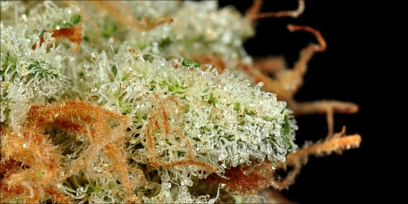 Weed Strains That 2 7 Weed Strains That Will Make You Laugh Your Ass Off