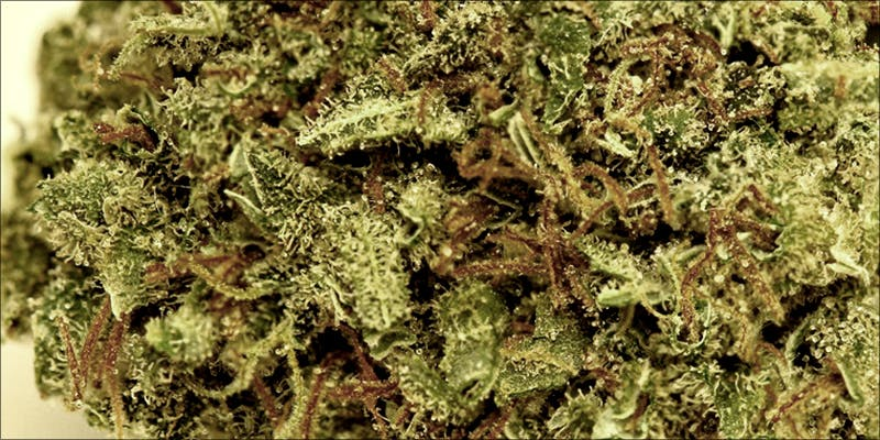 Weed Strains That 3 Heres What 81 Pounds Of Seized Weed Looks Like