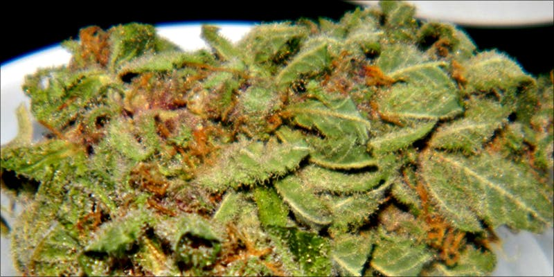 Weed Strains That 4 7 Weed Strains That Will Make You Laugh Your Ass Off