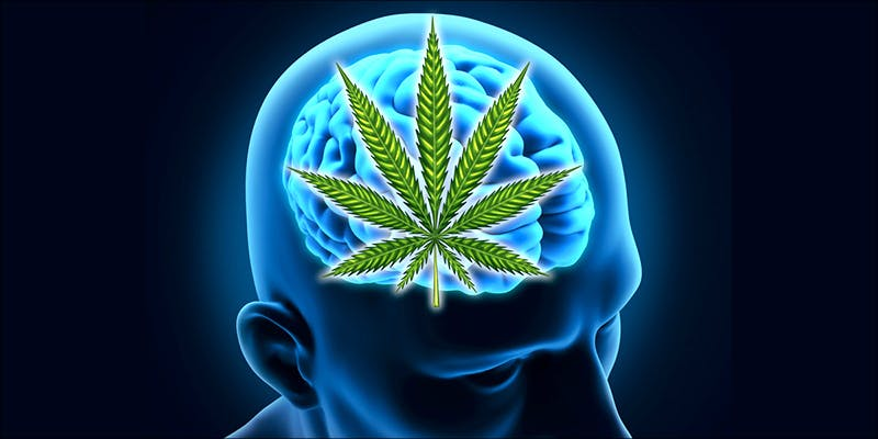 A Study Reveals 1 This 12 Year Old Boy Is Living Proof That Medical Cannabis Works