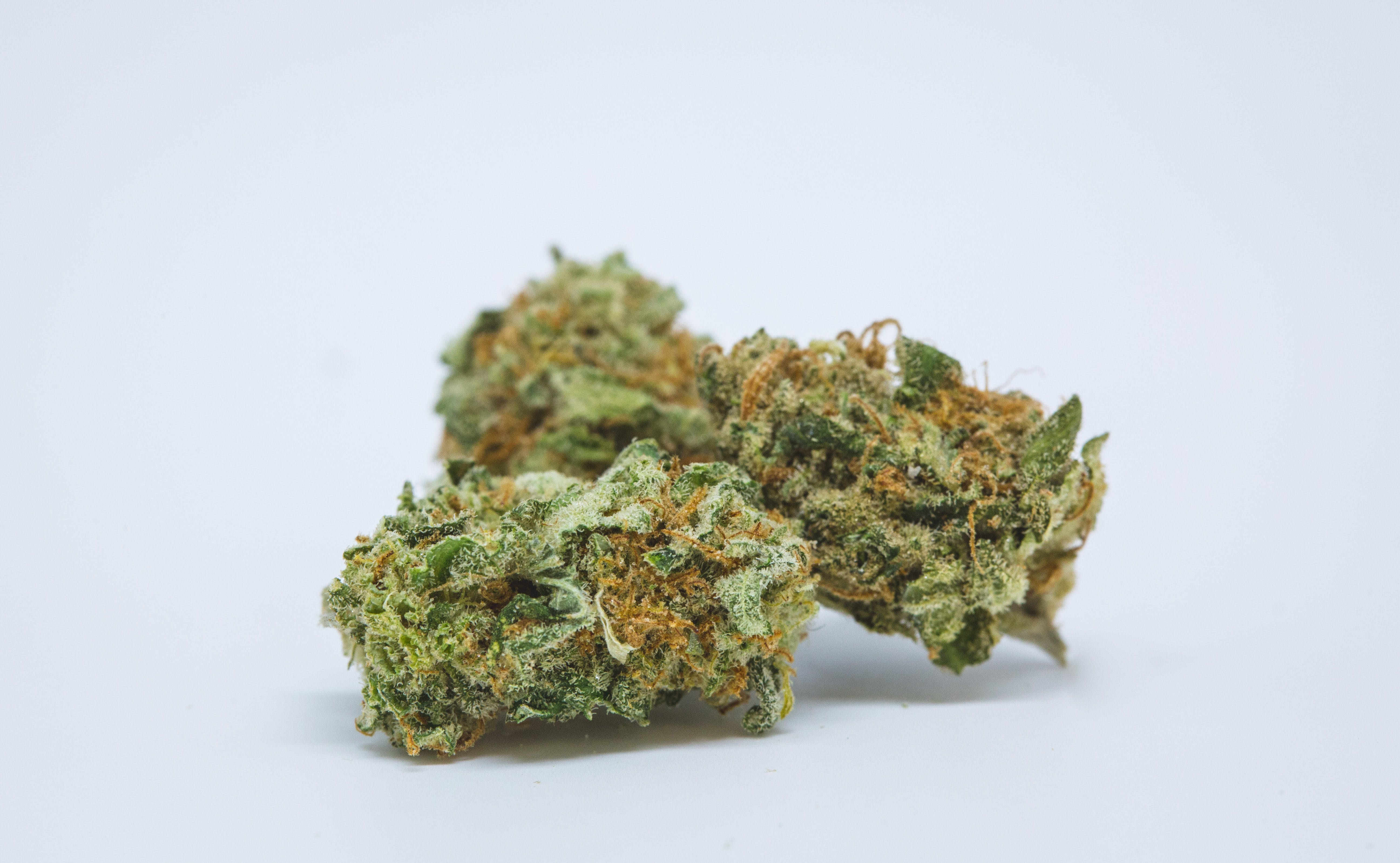 Best Buds Blue Dream 18 The US Military is waving cannabis use and letting medical marijuana patients serve