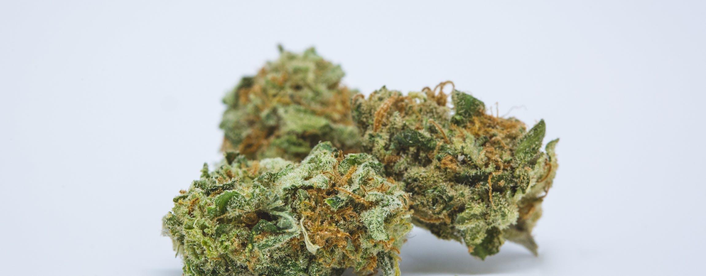 Dream Queen Weed; Dream Queen Cannabis Strain; Dream Queen Hybrid Marijuana Strain