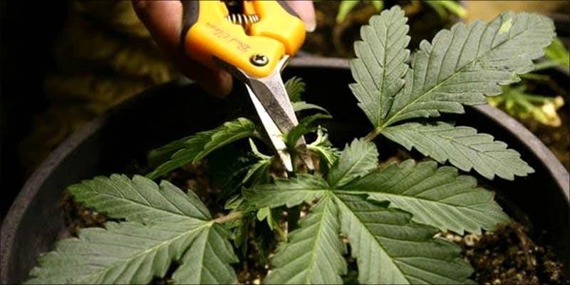 How To Grow 8 This 12 Year Old Boy Is Living Proof That Medical Cannabis Works