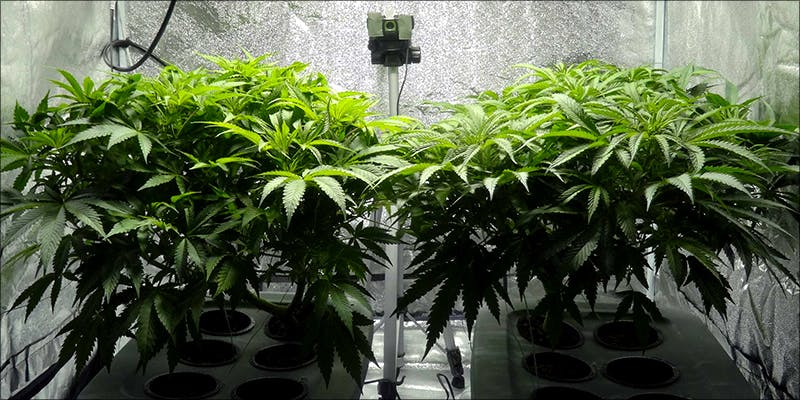 Perfect Grow Room 8 8 Steps To Building The Perfect Indoor Grow Room