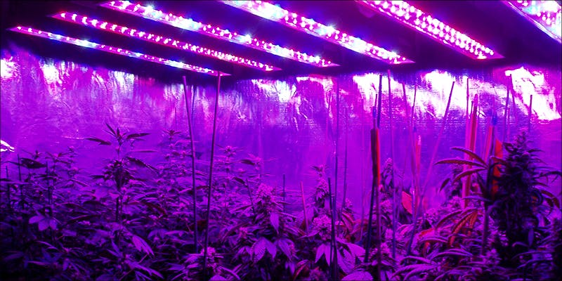 Perfect Grow Room lights 8 Steps To Building The Perfect Indoor Grow Room