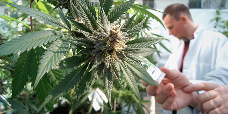 Researchers Say Regular 1 Stressed? A Little Weed Goes A Long Way, According to New Study