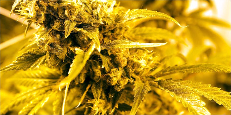 Right Medical Cannabis 8 10 Things Youll Understand If Youre A 20 Something Weed Smoker