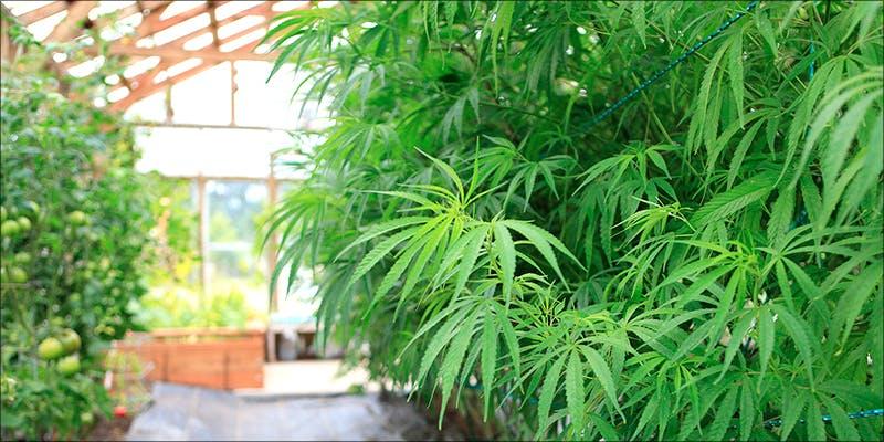 U.S. Marijuana Sales hero 7 Things That may Happen the First Time you Smoke Weed