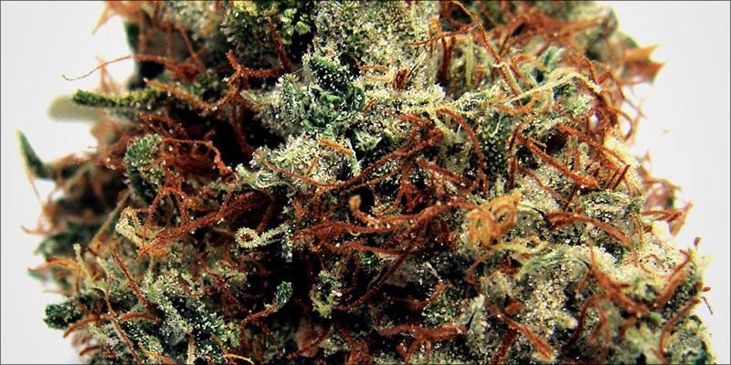 1:1 cannabis strains