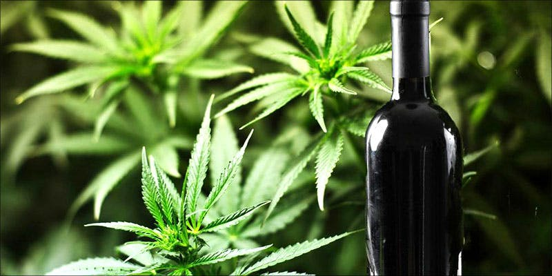 Wine Country Looking 2 These Marijuana Moms Say Smoking Weed Makes Them Better Parents
