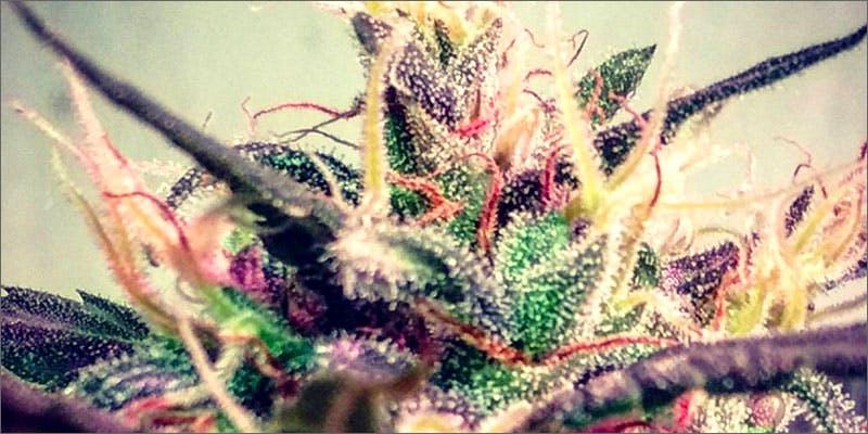 #WeedPorn
