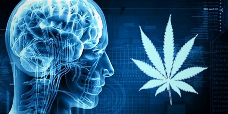How Much CBD 1 How Much CBD Oil Should You Take For An Effective Dose?