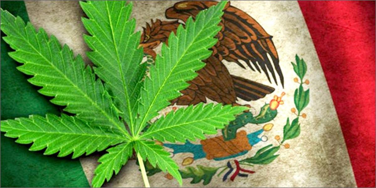 Flaga Meksyku z konopiami