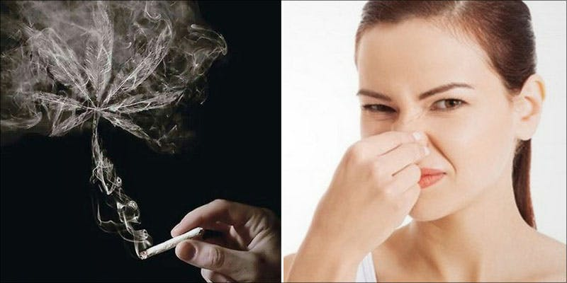 10 Things You 2 Police Issue Warning About Synthetic Cannabis After Spate Of Deaths