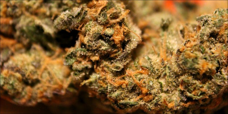 5 Strains You 1 Believe It Or Not, Cannabis Prohibition Just Celebrated Its 80th Birthday