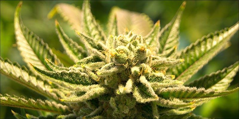 cannabis consumption method