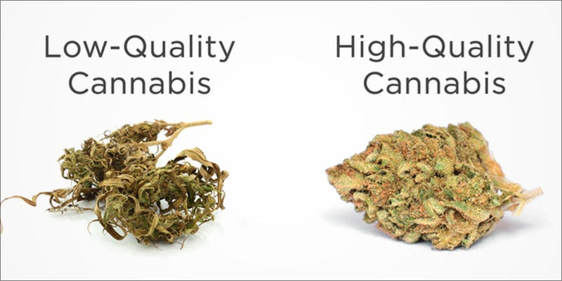 The Complete Connoisseur 2 The Complete Cannoisseurs Guide To Enjoying Cannabis
