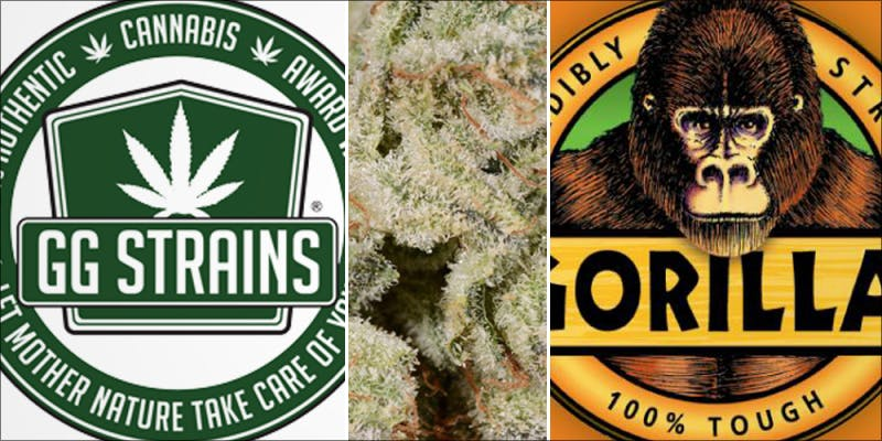 Gorilla Glue Lawsuit 1 Major New Study Says Cannabis Reduces Risk Of Stroke