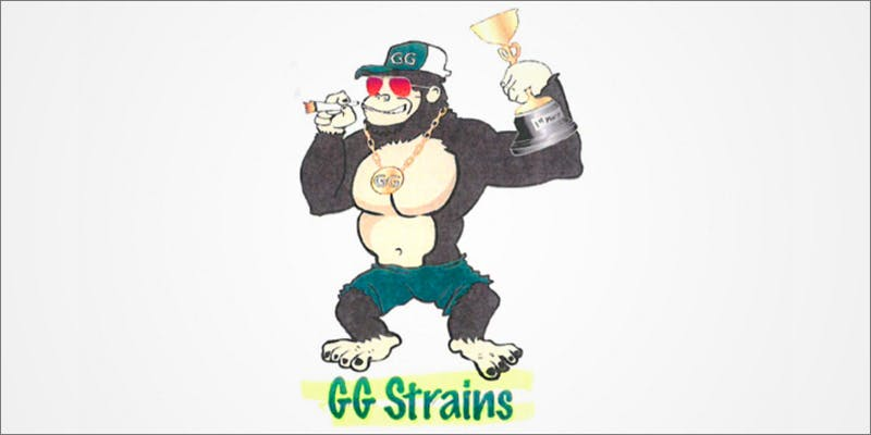 Gorilla Glue Lawsuit 2 Major New Study Says Cannabis Reduces Risk Of Stroke