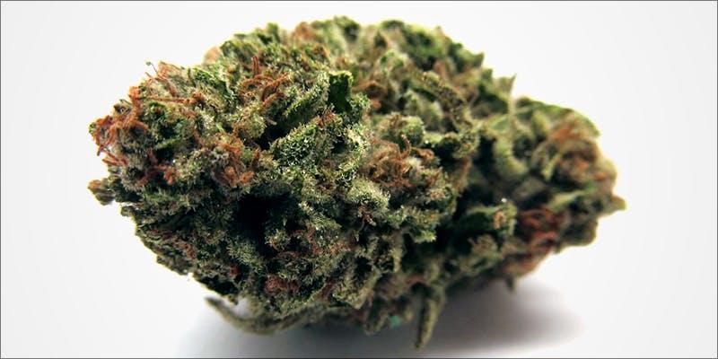 Mango Kush This hero Major New Study Says Cannabis Reduces Risk Of Stroke