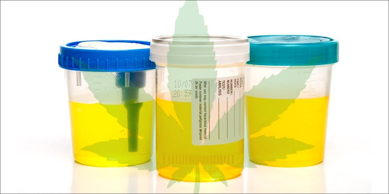 Necker Marketing 1 Major New Study Says Cannabis Reduces Risk Of Stroke