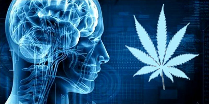 Study Finds CTE 4 Cannabis Oil Helped This Woman Beat Terminal Brain cancer